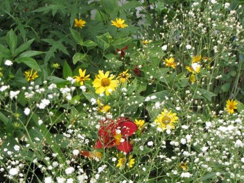 Truesdell's garden