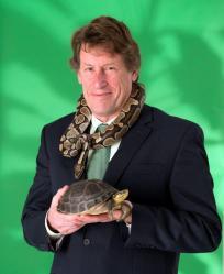 Kingsbury python turtle